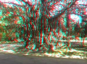 Banyan Tree 3D Anaglyph